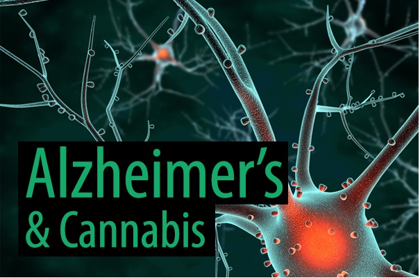 Study Summary: A Molecular Link between the Active Component of Marijuana and Alzheimer's Disease Pathology