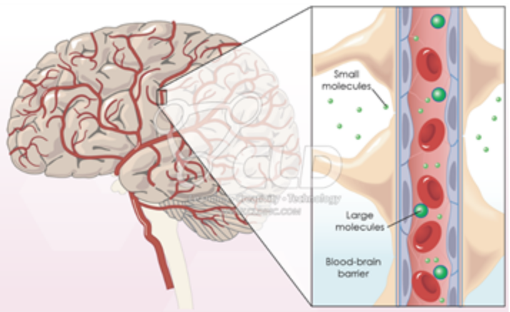 The Blood-Brain Barrier and How to Cross It