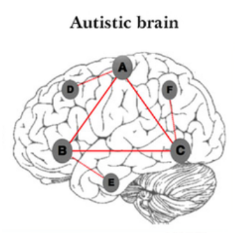 The Genetic Correlations to Autism
