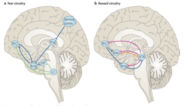 Neural Basis of Positive Behavior:  Resilience